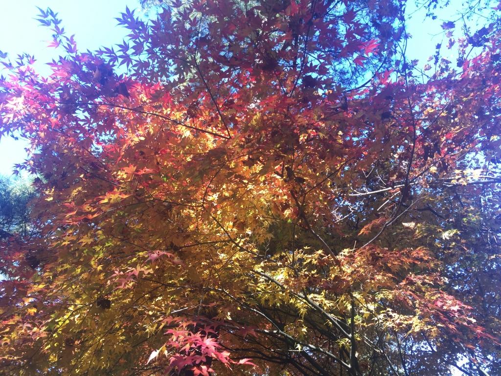 秋の小旅行に行って来ました!